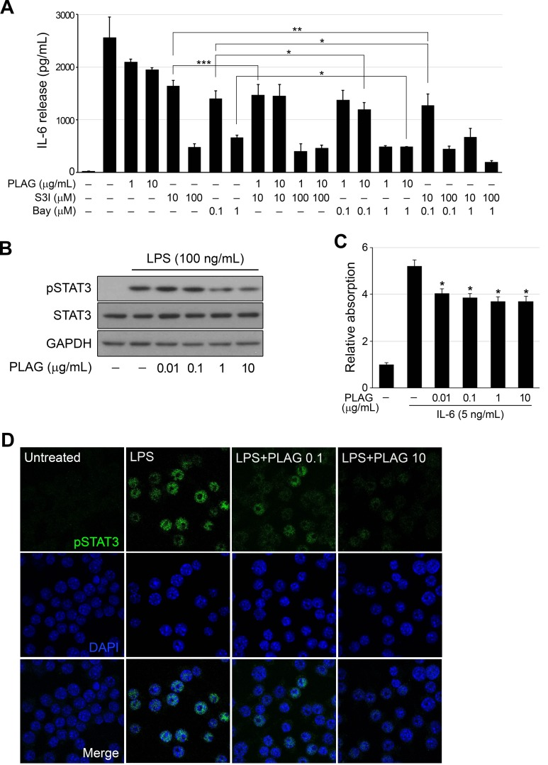 PLAG regulated activation of STAT3 A. LPS (100 ng/mL)-treated RAW264.7 cells were treated with Bay 11-7082 (0.1 or 1 μM) or S3I-201 (10 or 100 μM) alone or together with PLAG (1 or 10 μg/mL) for 12 h, and production of IL-6 was analyzed by ELISA of the culture medium. PLAG enhanced the inhibition of IL-6 production by both compounds. * p