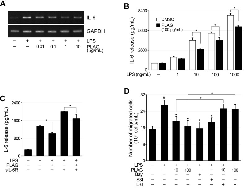 The migration of neutrophils was inhibited by PLAG A. LPS treatment (100 ng/mL) of RA-FLSs increased IL-6 expression, which was inhibited by co-treatment with PLAG in a concentration-dependent manner. B. IL-6 production by LPS-stimulated RA-FLSs was dependent on LPS concentration, and the inhibitory effect of PLAG was significant only after IL-6 production reached a certain level. * p