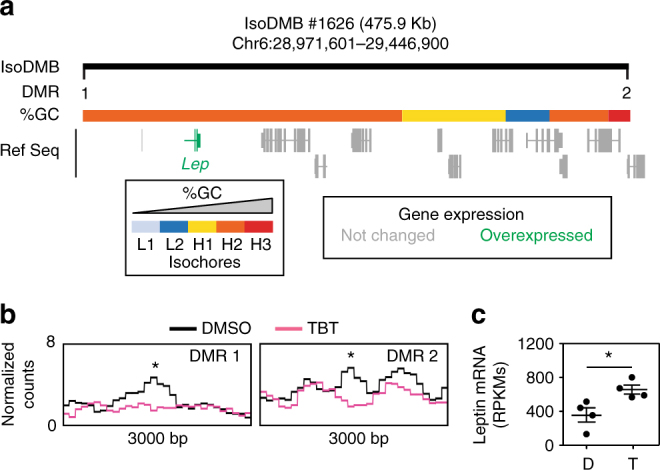 Ancestral TBT exposure leads to altered DNA methylation and expression of the leptin gene. a Upper panel represents isoDMB #1626 (black bar), and its overlap with regions with different GC content. DMRs punctuating this hypomethylated isoDMB are represented with black vertical bars and numbered (1–2). Overexpressed genes within the isoDMB (Lep, leptin) are represented in green and genes whose expression does not change between DMSO and TBT are represented in gray. b Bottom panels show the variation for the mean ( n = 4) of MBD-seq read coverage for TBT and DMSO samples within 3000 bp regions with the 100 bp DMRs indicated with an asterisk. c RPKMs from RNA-seq analysis of leptin mRNA expression ( n = 4). D, DMSO; T, TBT. Statistical significance was determined using R (version 3.3), and Bioconductor (version 3.3) package edgeR (version 3.14) 54 . Data are presented as mean ± s.e.m. *p