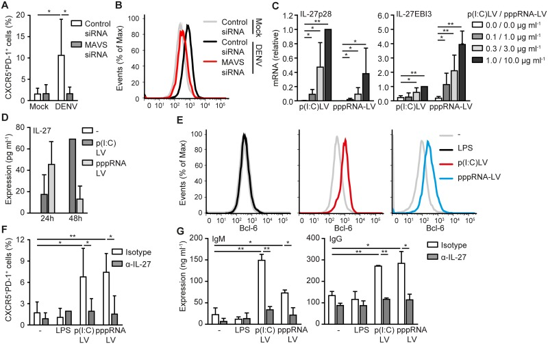 RLR activation by DENV or synthetic ligands drives T FH formation via IL-27. Flow cytometry analysis of extracellular CXCR5, PD-1 (A,F) and intracellular Bcl-6 (B,E) expression of differentiated T cells resulting from cocultured naive CD4+ T cells with mock-treated DC or DCs infected with DENV (A,B) or stimulated with LPS, poly(I:C)LyoVec or 5'pppRNA-LyoVec (E,F) for 48h in the absence or presence of neutralizing antibodies against IL-27 (F) or after silencing MAVS (A,B). (C) IL-27p28 and IL-27EBI3 mRNA levels in DCs stimulated with poly(I:C)LyoVec or 5'pppRNA-LyoVec for 8h were analyzed using real-time PCR, normalized to GAPDH and set at 1 in 1.0 μg ml -1 stimulated poly(I:C)LyoVec samples. (D) IL-27 in the supernatant of untreated, poly(I:C)LyoVec or 5'pppRNA-LyoVec stimulated DCs after 24h or 48h was analyzed by ELISA. (G) IgM and IgG in the supernatant of B cells cocultured for 7 days with differentiated T cells from cocultures of naive CD4+ T cells with untreated, LPS, poly(I:C)LyoVec or 5'pppRNA-LyoVec stimulated DCs was analyzed by ELISA. Data are representative of at least three (D,E) or two (B) independent experiments with different donors (mean ± s.d. of duplicates in, D) or are collated data (mean ± s.d.) of three (G), four (C,F) or two (A) different donors. ** P