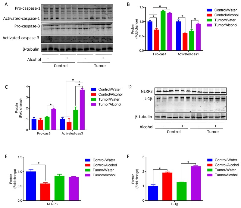 Alcohol promoted apoptosis and inflammation in skeletal muscle of tumor mice (A-C) Pro-caspase 1, activated caspase 1, Pro-caspase 3 and activated caspase 3 protein contents in GA muscle. (D-F) NLRP3 and IL-1β protein contents in GA muscle. ( * p