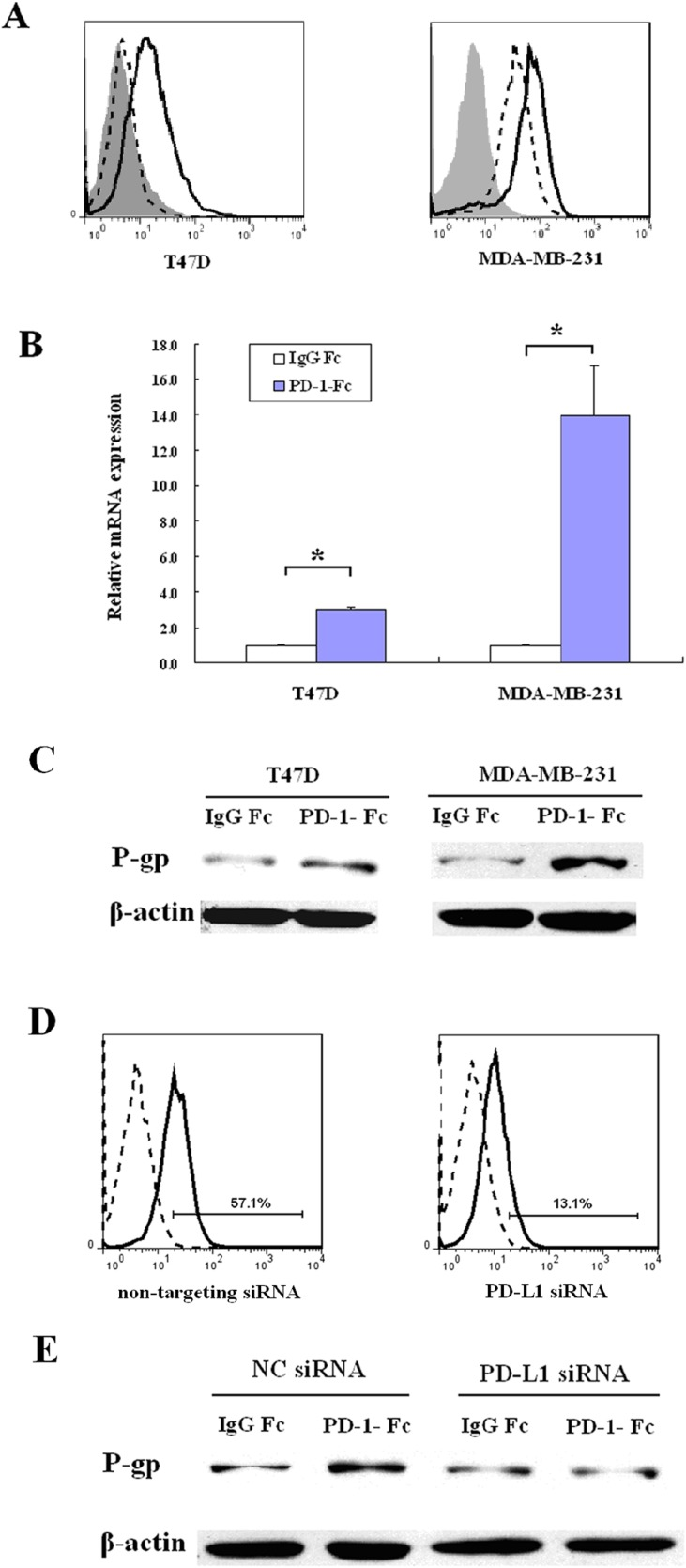 PD-1/PD-L1 interaction up-regulates MDR1/P-gp expression in breast cancer cell lines (A ) T47D and MDA-MB-231 cells were treated with 75ng/ml IFN-γ for 24 hours and the cell surface expression of PD-L1 was determined by flow cytometry. The shaded histograms indicate staining with PE-labeled isotype control IgG, the dashed histograms indicate staining with PE-labeled anti-PD-L1 antibody, and the open histograms indicate IFN-γ treated cells staining with PE-labeled anti-PD-L1 antibody. ( B ) MDR1 mRNA was analyzed by real-time quantitative PCR in MDA-MB-231 cells or IFN-γ-treated T47D cells after treatment with IgG Fc or PD-1-Fc for 24 h. Amplification of β-actin mRNA was used as a control.( * p