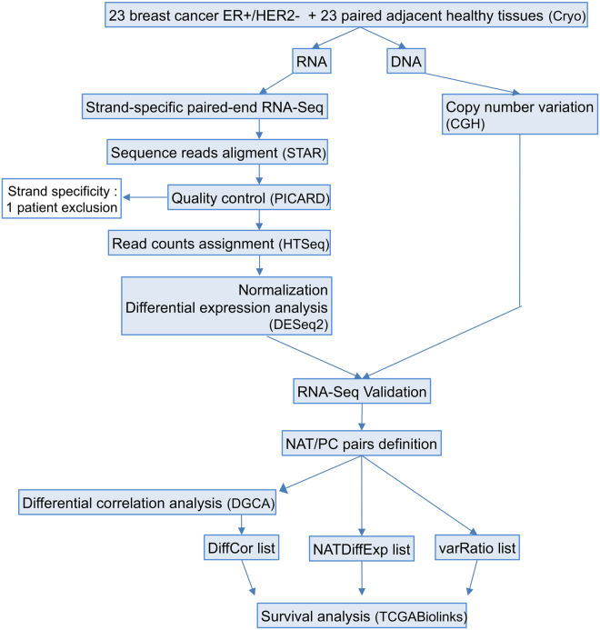 Study workflow. RNA and DNA were simultaneously extracted from 23 breast cancer ER+/HER2− tumors and their paired adjacent non-malignant tissues. Strand-specific paired-end RNA sequencing and comparative genomic hybridization (CGH) were performed. Quality control steps and RNA-Seq validation were performed and led to the elimination of one patient due to poor strand specificity in this sample. This strategy allowed the study of the differential expression of ncNATs and PCTs between tumors and non-malignant tissues and performance of differential correlation analysis of ncNAT/PCT pairs. Three lists of genes with deregulated ncNAT expression in tumors that could potentially affect the corresponding PC expression were extracted, and their coding genes were subjected to survival analysis with an external cohort (TCGA).