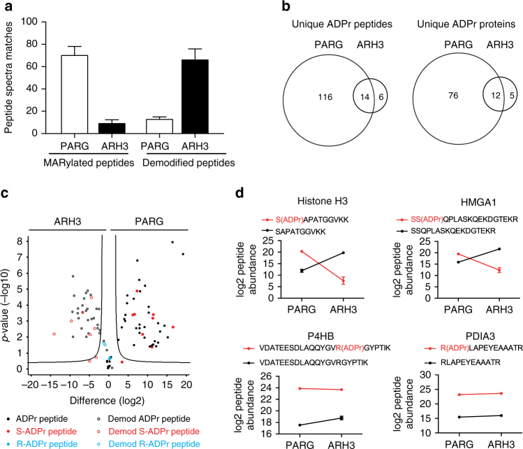 """ARH3 mainly hydrolyzes ADP-ribosylated serines in vitro. a Number of ADP-ribosylated peptide spectra matches (PSMs) or demodified peptide spectra matches after PARG or ARH3 treatment. Data represent means ± SEM for n = 3 independent demodification experiments. b Venn diagrams of unique ADPr peptides and proteins. c Volcano plot of ARH3- and PARG-treated samples. """"Unmodified peptides"""" are shown as open circles and """"ADP-ribosylated peptides"""" as filled circles. ADP-ribosylation sites confirmed by EThcD spectra are annotated and color coded in red as S-ADPr and in blue as R-ADPr sites. ADP-ribosylated peptides with uncertain ADP-ribosylation site localization are shown in black. The black hyperbolic line represents a permutation-based false discovery rate (FDR) of 5% and a minimal fold change of 2. d Normalized abundance of individual Ser- and Arg-ADPr peptides after PARG or ARH3 treatment. Data represent means ± SEM for n = 3 independent demodification experiments"""