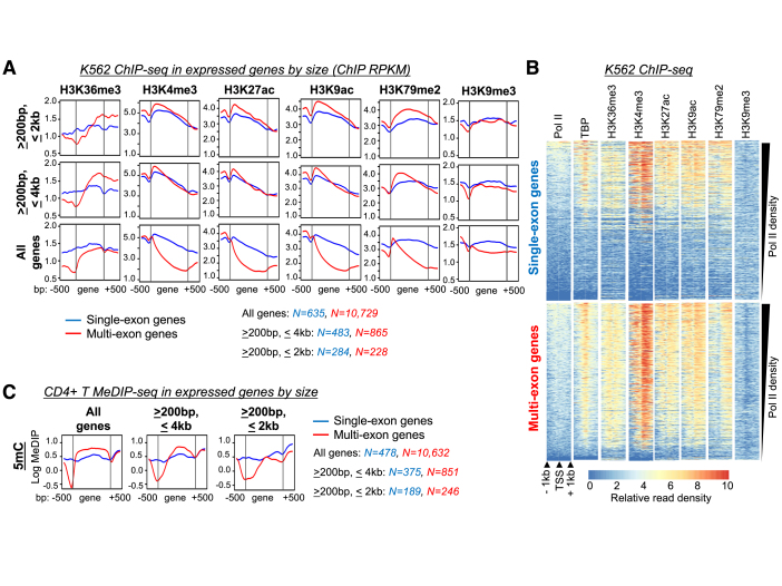Epigenetic profiles associated with expressed single- versus multi-exon genes in K562 and primary CD4+ human T cells. ( A ) Read coverage of transcription and splicing-associated histone post-translational modifications (PTMs) across the gene bodies of expressed genes in K562 cells. Genes were segregated into sets with different length restrictions; single- and multi-exon genes are shown in blue and red, respectively. ( B ) Heatmaps showing ChIP-seq read coverage for histone PTMs, pol II, and TATA binding protein (TBP) centered around transcription start sites (TSS) of single- and multi-exon genes; rows are sorted by decreasing pol II density. ( C ) Read coverage for 5-methylcytosine (5mC) MeDIP-seq in CD4 + T-cells over gene bodies of expressed genes. Read coverage is presented for all genes or segregated based on gene length. RPKM, reads per kilobase per million mapped (log scale); MeDIP, methylated DNA immunoprecipitation.