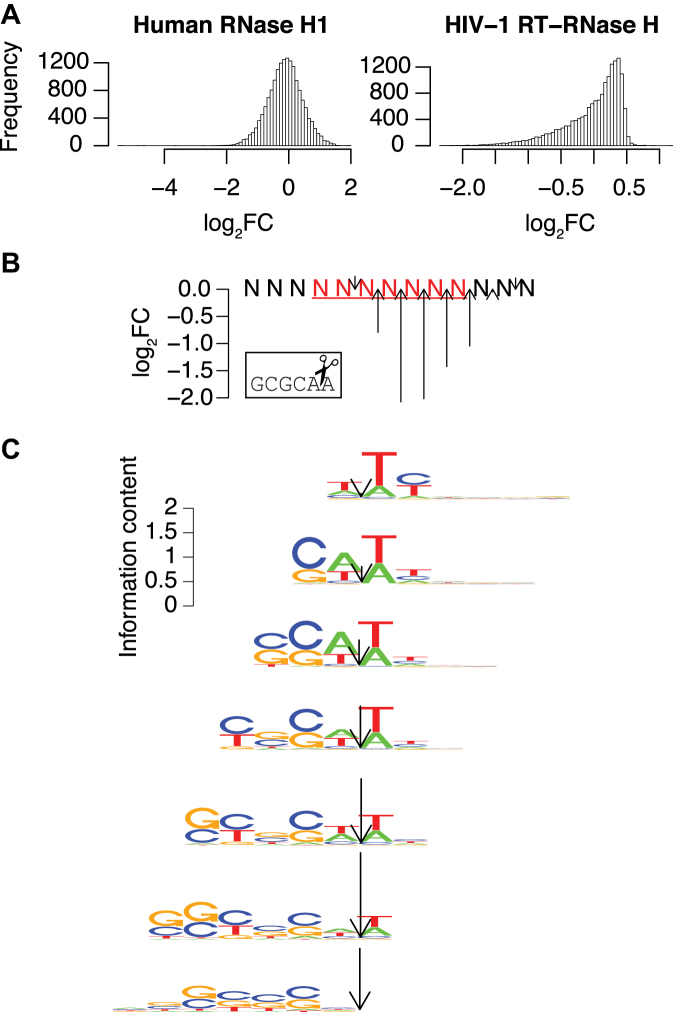 Refining the HIV-1 RNase H sequence preference model. ( A ) Distributions of the observed log 2 fold changes of RNA heptamers in R7 for human RNase H1 (right) and HIV-1 RNase H (left). ( B ) The observed log 2 fold changes after cleavage with HIV-1 RNase H for an efficiently cleaved hexamer (GCGCAA) located at different positions of R7. The position of the arrow indicates the cleavage site as aligned to the picture of scissors in the box and the arrow length represents the efficiency of cleavage. ( C ) Sequence logos of the best cleaved quartile of sets of heptamers predicted to have the same cleavage site. The arrows indicate the predicted cleavage site, with the length proportional to the observed cleavage efficiency.