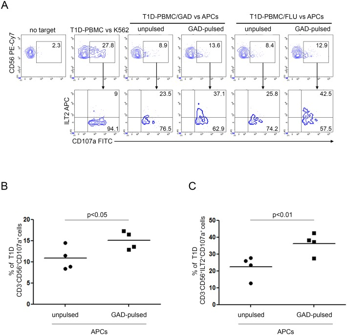 Increased susceptibility of GAD65 AA 114–122 peptide-pulsed APCs to T1D NK cell-mediated recognition associates with NK cell-ILT2 expression. Degranulation of CD3 - CD56 + ILT2 + NK cells of PBMC from T1D patients, expanded with GAD65 AA 114–122 or FLU peptides, measured as CD107a cell-surface expression following stimulation with APCs, either left unpulsed or GAD65 AA 114–122 peptide-pulsed. (A) A representative experiment out of two performed is shown. K562 cells were used as positive control. The percentage of CD3 - CD56 + CD107a + NK cells (upper panel) and CD3 - CD56 + CD107a + ILT2 + (lower panel) is indicated for each condition. (B) Summary of CD3 - CD56 + CD107a + and (C) CD3 - CD56 + ILT2 + CD107a + NK cell percentage of four T1D PBMC, expanded with GAD65 AA 114–122 or FLU peptides, following stimulation with APCs, either left unpulsed (circle dots) or GAD65 AA 114–122 (GAD65)-pulsed (square dots); horizontal bars, average values are reported.