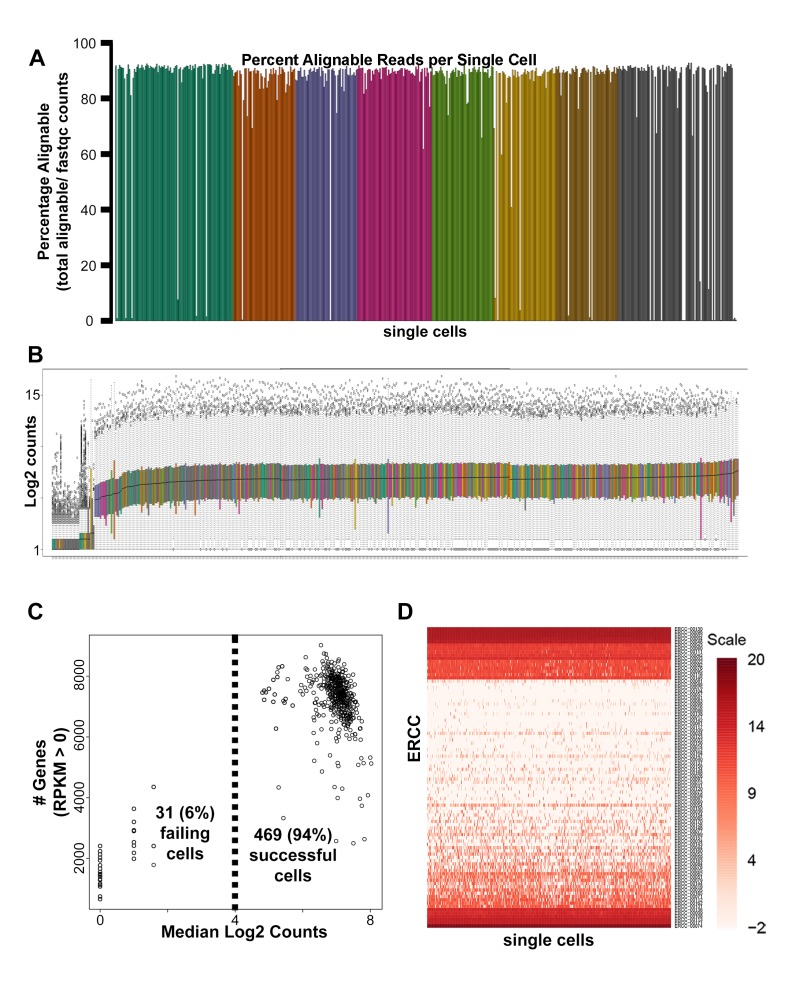 Single-cell RNA-seq quality control analyses. ( A ) Mapped read percentages for all single cells sequenced (n = 500). Two cells of the 502 cells harvested (0.4%) failed cDNA quality control measures and were not subsequently sequenced. ( B ) Box plots of log2 counts for 500 sequenced single cells. ( C ) Scatter plot of median log2 read count versus number of genes detected for each single cell sequenced. 31 (6.2%) of the 500 single cells sequenced were removed from downstream analysis due to distinctly lower counts ( B–C ). ( D ) Heatmap of log2 RPKM obtained for all External RNA Controls Consortium (ERCC) spike-ins across all single cells sequenced.