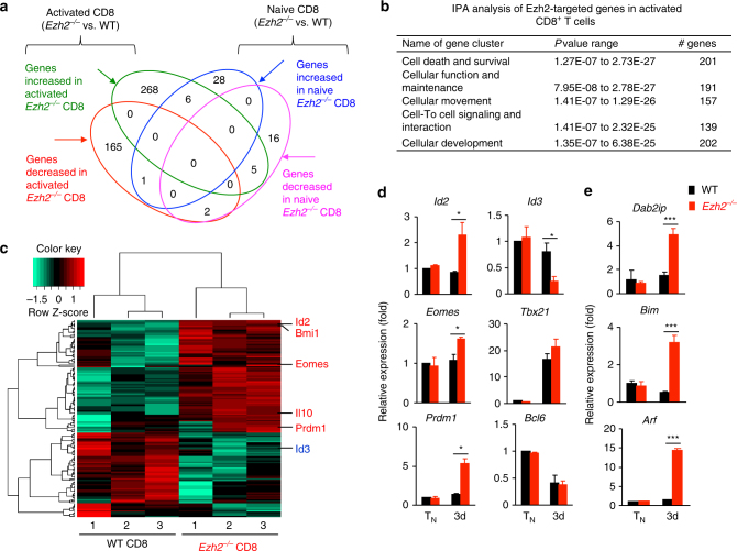 Ezh2 orchestrates the expression of genes critical for effector differentiation and memory formation . a – c WT and Ezh2 − / − Pmel-1 cells were cultured in the presence of anti-CD3/CD28 Abs and IL-2 for 3 days. Cells were collected to extract RNA for sequencing. Using one-way ANOVA analysis, we selected transcripts with p