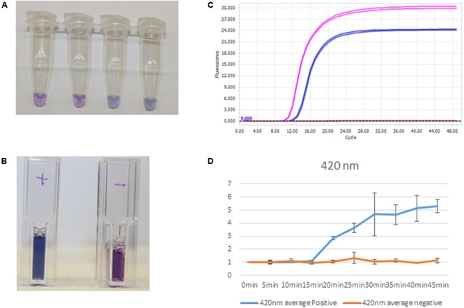 Clinical sample processing and analysis. (A) S. aureus detection by EBT-color change from purple to blue-Tubes 1 and 2, negative, and Tubes 3 and 4, positive. (B) Positives, S aureus clinical sample amplification by <t>thermocycler</t> (first, pink tracing) and positive controls, S aureus amplification (second, blue tracing). (C) Cuvettes with positive (left) and negative (right) color change corresponding to spiked DNA samples. (D) Spectrophotometric analysis at 420 nm with corresponding positive control amplification (blue) and negative control (orange) at times 0–45 min for positive and negative samples ( n = 3).
