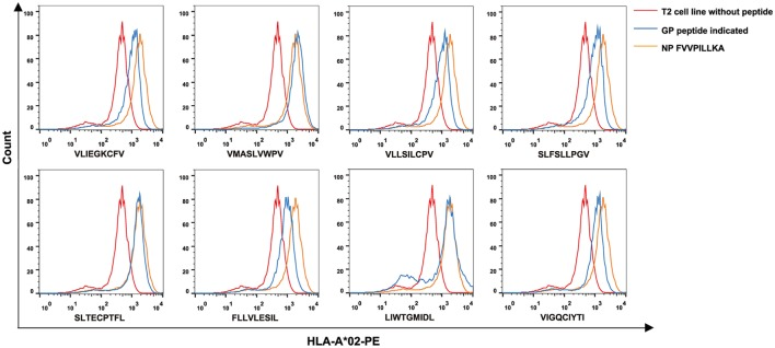 High binding affinity of eight Hantaan virus <t>(HTNV)</t> GP <t>nonapeptides</t> to HLA-A*0201 molecules. The T2 cell binding assay was used to quantify the peptide-binding affinity of 34 predicted HTNV GP nonapeptides to HLA-A*0201 molecules. T2 cells incubated with each peptide and β2-microglobulin were then stained with phycoerythrin-labeled HLA-A*02 monoclonal antibody and detected by flow cytometry. The orange curves indicate HLA-A*0201 stabilization with HLA-A*0201-restricted HTNV NP FA9 (aa129–aa137, FVVPILLKA) peptides serving as positive controls. The red curves indicate T2 cells incubated without peptide serving as negative controls. The blue curves indicate T2 cells incubated with each HTNV GP nonapeptide. The overlay of the three conditions in histograms clearly show that the curve of T2 cells incubated with each of the eight HTNV GP nonapeptides was shifted more to the right with a higher fluorescence intensity of HLA-A*0201 molecules than those incubated without peptide, indicating that these nonapeptides have a high binding affinity to the HLA-A*0201 molecule. GP, glycoprotein; NP, nucleoprotein.