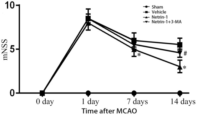 Neurological function assessed by mNSS. The scores were increased over different time points after MCAO, but significantly improved with netrin-1 infusion. The beneficial effect of netrin-1 was inhibited by 3-MA 14 days after MCAO. * P