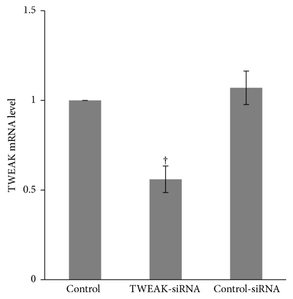 TWEAK mRNA expression was suppressed by TWEAK-siRNA-lipofectamine 2000 in PBMCs. Total RNA from PBMCs obtained from LN patients ( n  = 12) was extracted for quantitative real-time PCR. The ratio of TWEAK/ β -actin mRNA levels was calculated. The ratio of mRNA levels in cells treated with normal saline was designated as one. The error bars represent standard deviations. Control, PBMCs treated with normal saline; TWEAK-siRNA, PBMCs treated with TWEAK-siRNA-lipofectamine 2000; control-siRNA, PBMCs treated with control-siRNA-lipofectamine 2000.  † p