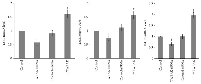 TWEAK upregulated expression of type I IFN-inducible genes in PBMCs. Total RNA from PBMCs obtained from LN patients ( n  = 12) was extracted for quantitative real-time PCR. The ratio of target gene/ β -actin mRNA levels was calculated. The ratio of mRNA levels in cells treated with normal saline was designated as one. The error bars represent standard deviations. Control, PBMCs treated with normal saline; TWEAK-siRNA, PBMCs treated with TWEAK-siRNA-lipofectamine 2000; control-siRNA, PBMCs treated with control-siRNA-lipofectamine 2000. rhTWEAK, PBMCs treated with rhTWEAK.  † p