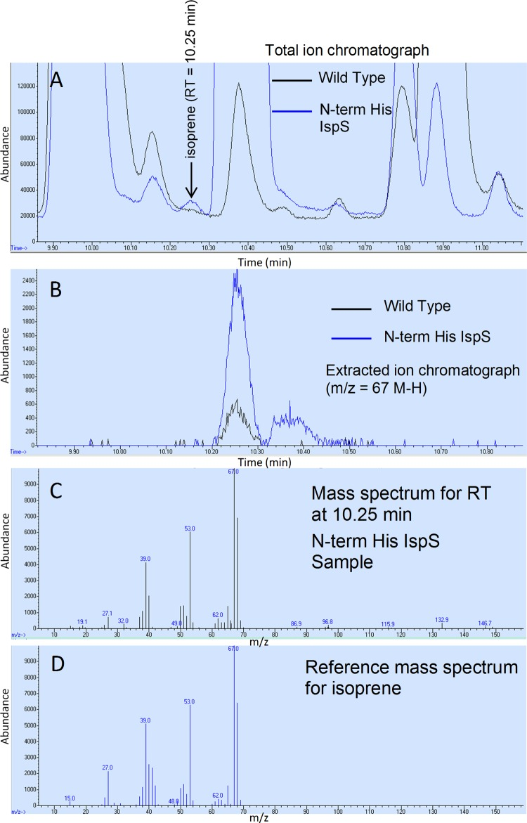 GC-MS detection of isoprene using SPME of culture headspace for C. ljungdahlii cultivated on syngas. C. ljungdahlii WT and the pJF100 Fdii N-terminally His-tagged IspS transformant were cultivated for 20 h at 30°C on MES-0F plus syngas ( Table 2 and File S2). After starting at an OD 600 of 0.5, the final OD 600 values were 1.034 and 0.888, respectively. The headspace was first sampled for GC determination of CO and CO 2 (see Table 3 ) and then separately sampled using SPME for isoprene content (see Table 2 ). (A) Gas chromatogram of the SPME-desorbed material with MS total ion detection for the WT (black) and the transformant (blue). The isoprene retention time (RT) is 10.25 min as determined by an isoprene standard (not shown). (B) Gas chromatogram with MS detection of isoprene using extracted ion mode (average m/z of 67 from 66.70 to 67.70) and <t>splitless</t> injection for the WT (black) and transformant (blue). (C) MS total ion mass spectrum at 10.251 to 10.26 min retention time for the transformant compared to the total ion mass spectrum (D) of an isoprene standard.