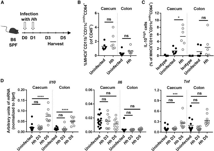 H. hepaticus Induces IL-10 in Gut-Resident Macrophages (A–D) SPF WT mice were infected with Helicobacter hepaticus ( Hh ) for 3 or 5 days. (A) Experimental design. (B and C) FACS analysis of caecum and colon LPL after 3 days of infection with Hh . (B) Frequency of resident macrophages among total CD45 + cells. (C) Frequency of IL-10 high cells among resident macrophages, using an anti-mouse IL-10 antibody or its isotype control. (D) Expression level of Il10 , Il6 , and Tnf mRNA in caecum or colon tissue after 3 or 5 days of infection with Hh . Each symbol represents an individual mouse (two to three independent experiments). Mann-Whitney test (B and C) or one-way ANOVA and Tukey's multiple comparisons test (D), p