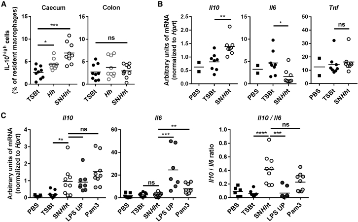 SN Hh t Is Sufficient to Induce IL-10 In Vivo (A) Frequency of IL-10 high cells among resident macrophages from caecum and colon LPL. SPF WT mice were infected with Hh or orally gavaged with TSBt or SN Hh t for 3 days. (B and C) Il10 , Il6 , and Tnf mRNA expression levels in the peritoneal cell fraction after 2 days (B) or Il10 and Il6 mRNA transcripts after 6 hr (C) challenge. Ligands (TSBt and SN Hh t, 200 μL; LPS UP and Pam3, 50 μg) were injected into the intraperitoneal cavity of SPF WT mice. Each symbol represents an individual mouse (two to three independent experiments). Pam3, Pam3CSK4. Mann-Whitney test, p