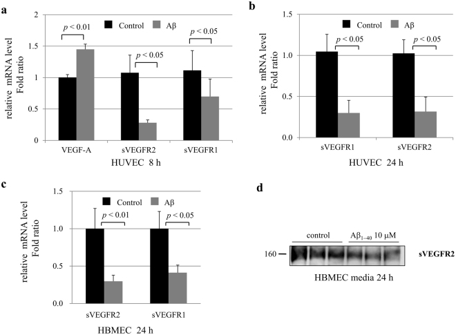 sVEGFR2 and sVEGFR1 mRNA expression in endothelial cells. ( a ) HUVEC were treated with 10 μM of Aβ 1–40 peptides for 8 h. Real-time PCR results showing relative mRNA expression levels of VEGF-A , sVEGFR2 , and sVEGFR1 (n = 3). ( b ) After HUVEC were treated with 10 μM of Aβ 1–40 peptides for 24 h, sVEGFR1 and sVEGFR2 mRNA expression levels were measured by real-time PCR (n = 3). ( c ) HBMEC were treated with 10 μM of Aβ 1–40 peptides for 24 h. sVEGFR2 and sVEGFR1 mRNA expression levels were measured by real-time PCR (n = 3). ( d ) Splicing variant form of VEGFR2 (sVEGFR2) protein levels were detected in HBMEC cell culture media. The cropped blot is displayed in the main figure, and its full-length blot is presented in Supplementary Figure 1 . Treatment of 10 μM of Aβ 1–40 peptides for 24 h decreased the sVEGFR2 levels (n = 3).