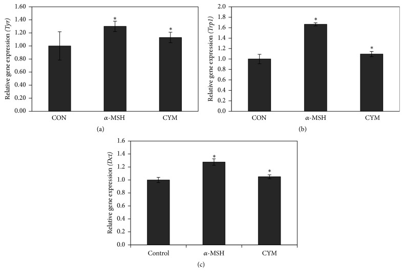 Effect of Cymbopogon schoenanthus ethanol extract on the mRNA expression level of melanogenic enzymes: (a) tyrosinase (Tyr) , (b) tyrosinase-related protein 1 (Trp1) , and (c) dopachrome tautomerase (Dct) determined using TaqMan real-time quantitative PCR. B16 cells were cultured in 100 mm dish (3 × 10 6 cells/dish) and treated without (CON) or with 1/1000 (v/v) C. schoenanthus ethanol extract (CYM), using 400 nm alpha-melanocyte-stimulating hormone ( α -MSH) as a positive control and incubated for 4 h after which RNA was extracted, and then reverse transcription PCR was carried out to obtain cDNAs that were used for real-time PCR (ABI 7500 Fast Real-time PCR system). Results represent the mean ± SD of three independent experiments. ∗ Statistically significant ( P ≤ 0.05) difference between control and treated cells.
