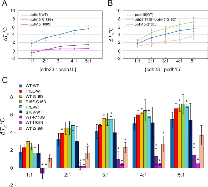 Variation of ΔT m at increasing ratios of cdh23 and pcdh15. (A) Variation of ΔT m for WT and two deafness-related complexes at increasing concentration ratios. The WT ΔT m increases from ~2 to ~5.5°C from 1:1 to 5:1 ratios. The deafness mutants have ΔT m