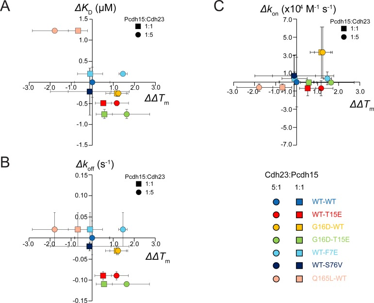 Rate and equilibrium constants for different mutants vs ΔΔT m . (A-C) K D vs ΔΔT m (A), k off vs ΔΔT m (B), and k on vs ΔΔT m (C) for various cdh23-pcdh15 complexes (WT-WT: light blue; T15E-WT: red; WT-G16D: yellow; T15E-G16D: light green, F7E-WT: cyan; S76V-WT: navy blue; WT-Q165L: pink). Squares and circles represent data points for ΔΔT m at 1:1 and 5:1 ratios, respectively. The WT-WT complex lies at the origin. Data points along the dashed diagonal line in A support ΔΔT m as a good predictor of K D , while data points off the diagonal indicate exceptions (most notably F7E-WT). Vertical error bars represent standard deviation for measurements of the rate or equilibrium constant of that mutant. Horizontal error bars represent the standard deviation for the ΔT m measurement.