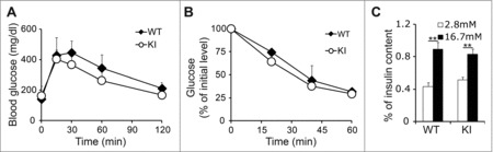 Overexpression of cyclin D2 in β cells does not diminish β cell function. (A) Glucose tolerance test was performed in 3-month-old WT and KI mice. (B) Insulin tolerance was performed in 3-month-old WT and KI mice. (C) Glucose stimulated insulin secretion was measured in 3-month-old WT and KI mice. n = 4–5 animals per group. Data shown as mean ± SD of 3 independent experiments. **P