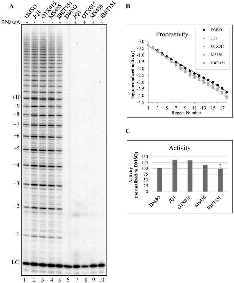 BRD4 inhibition does not affect telomerase enzyme activity. ( A ) Direct telomerase assay using whole cell lysates of 293TRex cells overexpressing hTR, TERT, POT1 and TPP1, which were treated with DMSO (lane 1), 0.5 μM JQ1 (lane 2), 2.5 μM OTX015 (lane 3), 25 μM MS436 (lane 4) or 5 μM IBET151 (lane 5). Lanes 6–10 show extracts pretreated with RNase A to show activity due to RNase sensitive telomerase enzyme. ( B ) Quantification of telomerase processivity and ( C ) Quantification of telomerase catalytic activity as described in 'Materials and Methods' section. Values in (B) and (C) are averages of two technical replicates. Error bars in (C) represent the standard deviation.