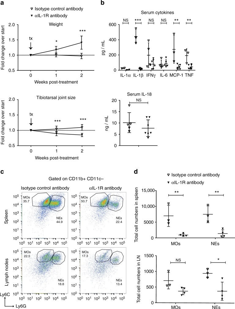 Blocking IL-1R relieves disease symptoms. iOvaFla; LysM-Cre +/− mice with significant joint swelling at 4.0 mm were administered either anti-IL-1R blocking antibody or isotype control every 3–4 days for 2 weeks. a Their weights and tibiotarsal joints were measured during that time ( n = 7 biological replicates per treatment). b Post-treatment serum cytokines measured by a BD Biosciences cytokine bead array and IL-18 ELISA. c Flow cytometry and d quantification of monocytes (MO; CD11b + Ly6C Hi Ly6G Lo ) and neutrophils (NE; CD11b + Ly6C Lo Ly6G Hi ). For each flow cytometry plot, the top row is from the spleen and the second row from peripheral and mesenteric lymph nodes. Each column represents a different treatment. Data in b – d are representative of three independent experiments. Error bars are s.d. Results were analysed with either a Mann–Whitney test or two-way ANOVA and Bonferroni post-tests; * p