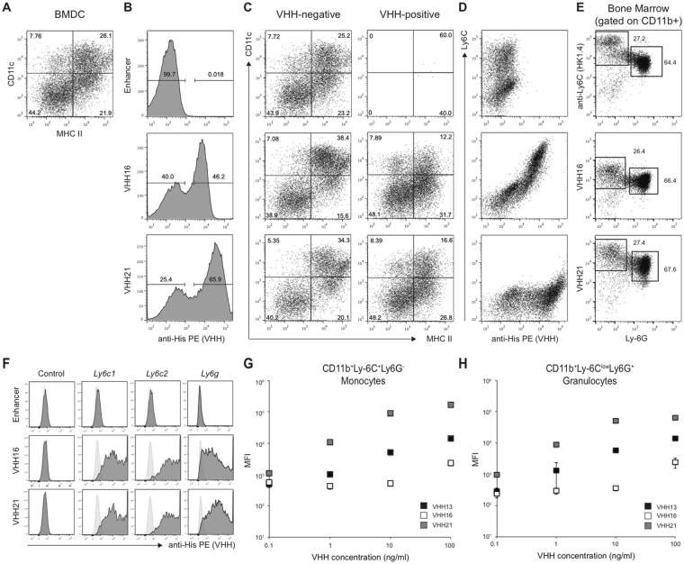 VHH16 and VHH21 recognize mouse Ly-6C and Ly-6G. ( A – D ) Mouse BMDC were obtained after differentiation for 6 days with GM-CSF and IL-4. ( A ) MHCII vs CD11c expression on live, differentiated cells. ( B ) Binding of GFP-specific Enhancer, VHH16 and VHH21 on live cells. ( C ) MHCII vs CD11c expression on live cells negative or positive for VHH binding. ( D ) VHH binding vs Ly-6C expression on live cells. ( E ) Ly-6C, VHH16 or VHH21 vs Ly-6G expression gated on CD11b positive fresh bone cells. ( F ) Binding of Enhancer, VHH16 or VHH21 to control HEK 293 cells or cells transfected with Ly6c1 , Ly6c2 or Ly6g constructs. Light grey histograms: unstained control. ( G and H ) Scattered plots show VHHs mean fluorescent intensity (MFI) binding on flow cytometry-sorted monocytic (CD11b + Ly-6C + Ly-6G − ) ( G ) or granulocytes (CD11b + Ly-6C low Ly-6G + ) ( H ) subsets from fresh bone marrow for indicated VHH concentrations. Each panel representative of 2 independent experiments or more.