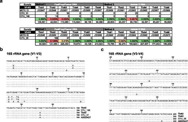Molecular identification of reptile-associated Borrelia species in the Goanna tick ( Bothriocroton undatum ) from Sydney, Australia. a Summary table showing the V1-V3 and <t>V3-V4</t> 16S <t>rRNA</t> gene diversity profiling assay reads for Borrelia OTUs within each tick sample (Tick 1–6) recovered using either Method 1 or Method 2. The table includes the total number of high quality reads, the proportion of Borrelia reads, as well as the library identifier (JS2948-JS2970). b , c Multiple sequence alignment of the overlapping Borrelia OTU region of the V1-V3 ( b ) and V3-V4 ( c ) 16S rRNA gene sequence, with Borrelia sp. 16S rRNA gene sequence amplified from Tick2 and Tick3. Identical residues with the top reference are indicated by dots. Both Borrelia spp. Tick2 and Tick3 16S rRNA gene sequences are indistinguishable within the V3-V4 16S rRNA <t>hypervariable</t> region