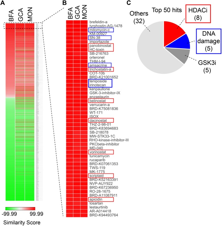 Connectivity map analysis of classical Golgi-fragmenting drugs predicts HDAC inhibitors and DNA-damaging agents as compounds with a similar mode of action. The gene expression signatures of A549 cells treated for 20 h with 71 nM BFA, 5 µM GCA, or 10 µM monensin were determined and used to query the LINCS L1000 database to identify compounds with similar gene expression profiles. (A) Heat map representation of all the gene expression signatures in the L1000 database and their connectivity scores in comparison with our own BFA, GCA, and monensin input expression profiles. The data were sorted based on the similarity score for BFA. (B) Detailed view of the top 50 correlations identified in this analysis and sorted by their similarity to the BFA profile. Blue boxes indicate DNA-damaging agents; red boxes indicate HDAC inhibitors. (C) Pie chart summarizing the compounds in the top 50 hit list.
