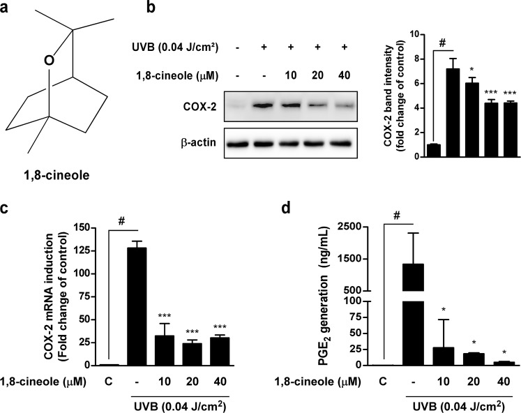 Effect of 1,8-cineole on UVB-induced COX-2 protein, mRNA expression, and PGE2 generation in HaCaT cells (a) Chemical structure of 1,8-cineole. (b) 1,8-cineole inhibits UVB-induced COX-2 protein expression in HaCaT cells. Cells were pre-treated with 1,8-cineole at the indicated concentrations for 1 hour, irradiated with UVB, and then harvested after 18 hours. Expression levels of COX-2 and β-actin were determined by Western blotting. Data are representative of three independent experiments that gave similar results. (c) 1,8-cineole inhibits UVB-induced COX-2 mRNA expression in HaCaT cells. COX-2 mRNA levels were measured by qRT-PCR. Cells were pre-treated with 1,8-cineole at the indicated concentrations for 1 hour, irradiated with UVB, and then total RNA was extracted after 4 hours. Data are represented as the mean ± SD of three independent experiments. (d) 1,8-cineole inhibits UVB-induced PGE 2 generation in HaCaT cells. The quantity of PGE 2 in the culture medium was measured by ELISA. Data are represented as the mean ± SD of three independent experiments. Hash symbol ( # ) indicates a significant difference between the control and the UVB-treated group; asterisk symbols ( * and *** ) indicate significant differences (p