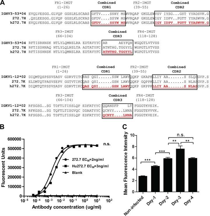 Humanization of a rabbit HCMV gB-specific antibody and detection of gB expression on the surfaces of HCMV-infected cells. (A) Sequence alignment of the closest human germ lines (IGHV3-53*04), rabbit antibody 272.7, and the humanized antibody (hu272.7). The combined CDRs determined are boxed. Antibody humanization was performed by CDR grafting. (B) The humanized antibody maintained affinity and specificity for gB. The rabbit 272.7 and hu272.7 antibodies in titration were tested for binding to gB protein by ELISA. EC 50 s were deduced from four-parameter curve fitting. The statistical significance of differences between the rabbit 272.7 and hu272.7 antibodies was analyzed by two-way ANOVA. n.s., not significant ( P > 0.05). (C) Detection of gB expression on the surfaces of HCMV-infected ARPE-19 cells by a flow cytometry assay. The mean fluorescence intensities ± SD of gB-specific signals from triplicate samples are shown. The data are representative results from two independent experiments. Statistical significance was determined by the unpaired two-tailed t test. **, P