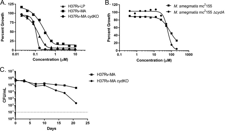 cyt- bd confers resistance to PAB compounds. Concentration-response curves for IDR-0341930 against M. tuberculosis (A) or M. smegmatis (B) strains. (C) Kill kinetics of IDR-0341930 against aerobically growing M. tuberculosis <t>H37Rv-MA</t> or H37Rv-MA cydC :: aph . IDR-0341930 was added at 10× the MIC of the individual strains. Data are representative are at least three independent experiments. The dotted line represents the limit of detection (10 bacteria/ml).