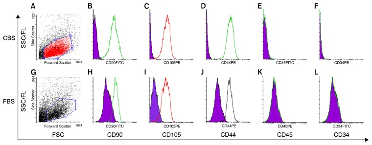 Flow cytometry of UCMSCs cultured in human CBS supplemented medium (A~F) and in FBS supplemented medium (G~L). (A, G) FSC and SSC distribution of gated cells. Cells stained positive for CD90 (B, H), CD105 (C, I), CD44 (D, J), while stained negative for CD45 (E, K), and CD34 (F, L).