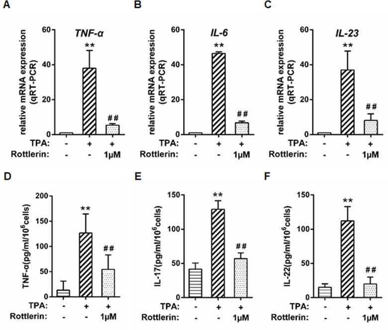 Rottlerin exhibits anti-inflammatory effect in TPA-triggered keratinocytes. Near-confluent cultures of primary keratinocytes were treated with 0, 1, 5, and 10μM rottlerin for 22 hours. The cells were then co-treated with 100nM TPA for 2 hours (for a total of 24 hours of exposure to rottlerin). The mRNA expression levels were measured at 24h by qRT-PCR: (A) TNF-α; (B) IL-6; (C) IL-23. Mediators in the supernatant fluids at 24 h were measured by ELISA: (D) TNF-α; (E) IL-17; (F) IL-22. (n = 3, ** P