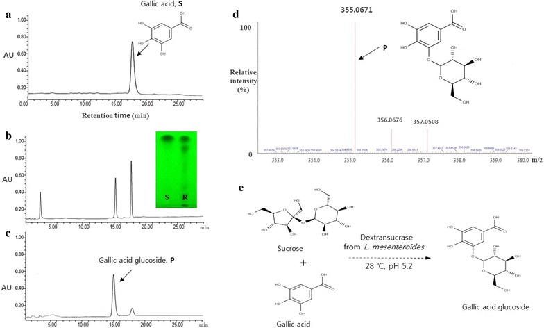 The schematic diagram of the reaction and <t>HPLC</t> chromatogram of gallic acid glucoside after preparative HPLC. Gallic acid standard (1 mg/mL) in ethanol ( a ), dextransucrase reaction digest for 6 h ( b ), purified gallic acid glucoside ( c ), MALDI-TOF MS spectrum of gallic acid glucoside ( d ), and the schematic diagram of the reaction ( e ). S gallic acid, R enzyme reaction mixture of gallic acid, and P final product. Column, <t>TSK-GEL</t> amide-80, 5 μm (Waters, Milford, MA, USA); mobile phase, acetonitrile/water = 80:20 (v/v); flow rate, 1.0 mL/min; room temperature; detection, RID-10A RI detector (Shimadzu)