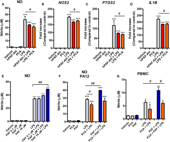 Endogenous platelet-activating factor (PAF) contributes to the pro-inflammatory response elicited by lipopolysaccharide (LPS) and exogenous PAF potentiates LPS-induced inflammation in chicken primary macrophages. After stimulation with E. coli LPS (10 ng/ml) in the presence or absence of PCA 4248 (10 µM) or human PAF-acetylhydrolase (PAF-AH) (10 µg/ml) for 6 h, B13/B13 histocompatible chicken-derived bone marrow-derived macrophage <t>(BMDM)</t> supernatants were assessed for the presence of (A) nitric oxide (NO), and cell lysates were used to analyze gene expression of (B) iNOS/ NOS2 , (C) COX-2/ PTGS2 , and (D) IL-1β/ IL1B by quantitative real-time PCR. Data are expressed as relative normalized expression (as compared to vehicle control group). (E) PAF (0.1–10 µM) alone or together with LPS was added to BMDM, and NO production in the supernatants was assessed after 6 h. (F) NO production by BMDM derived from the bone marrow of the outbred PA12 chickens following exposure to PAF (10 µM) and/or LPS in the presence or absence of PCA 4248 (10 µM) for 6 h. (G) NO production by peripheral blood mononuclear cells <t>(PBMC)</t> from B13/B13 histocompatible chickens following exposure to PAF (10 µM) and/or LPS in the presence or absence of PCA 4248 (10 µM) for 6 h. Values are mean ± SEM. * P