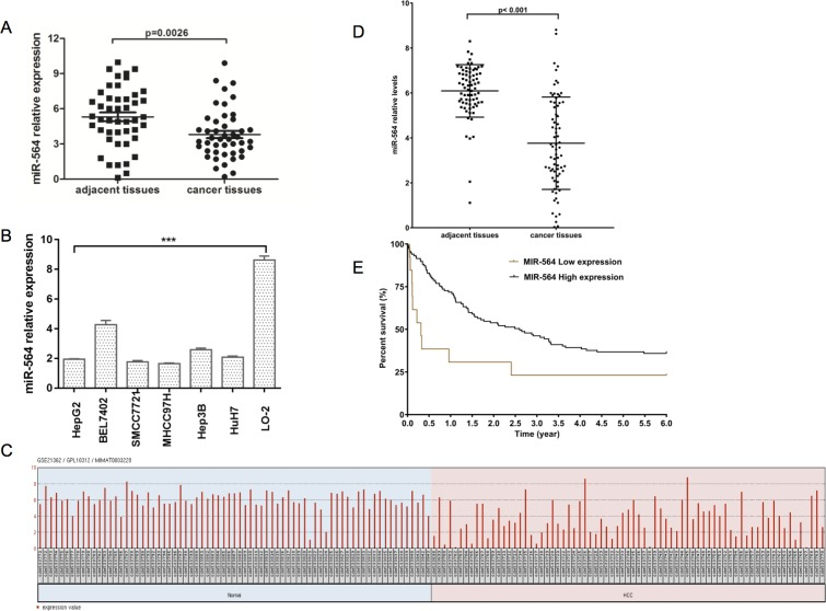 miR-564 expression is downregulated in HCC ( A ) miR-564 expression in HCC tissues and adjacent noncancerous tissues was quantified by qRT-PCR. The differences were statistically significant. ( B ) The expression of miR-564 in different HCC cell lines and the normal liver cell line LO-2 was measured by qRT-PCR; U6 was used as an internal reference. ( C ) miR-564 data were collected from the GEO dataset GSE21362. After quality control, 73 HCC and adjacent noncancerous liver samples were used for the analysis. ( D ) Differentially expressed levels of miR-564 in the GSE14520 dataset were determined using the Limma package on the R platform. The cutoff values for significantly differentially expressed miR-564 were a P value