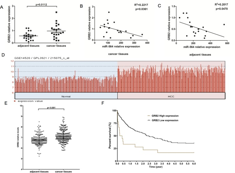 GRB2 is upregulated in HCC and is inversely correlated with miR-564 expression ( A ) GRB2 mRNA expression in 20 HCC and adjacent noncancerous tissues as detected by qRT-PCR. ( B – C ) The correlation between miR-564 and GRB2 mRNA expression levels in cancer tissues and adjacent tissues was determined by Spearman's correlation analysis. ( D – F) . GRB2 was differentially expressed in the GSE14520 dataset, as determined using the Limma package on the R platform. The cutoff for significantly differentially expressed levels of miR-564 was P value