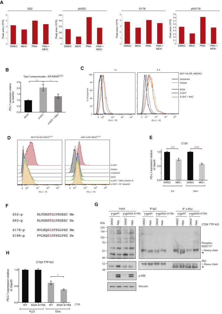 RAS-ROS-p38 Signaling Controls TTP Activity (A) Histograms represent peak areas from extracted ion chromatograms for non-phosphorylated and phosphorylated peptides corresponding to S52 and S178 phosphosites of mouse TTP. Myc-TTP was immunoprecipitated from CT26 Myc-TTP (tet-ON) cells 1 hr after the indicated treatment. Mean ± SD of technical triplicates. Representative of two independent biological experiments. (B) qPCR analysis of ER-KRAS G12V type II pneumocytes treated in starvation medium for 24 hr. Mean ± SEM of four independent experiments. (C) Representative flow cytometry histograms of PD-L1 surface protein expression in MCF10A ER-ΔMEKK3 cells treated in starvation medium for 1 day or 4 days. Data are representative of two independent experiments. (D) Flow cytometry analysis of PD-L1 surface protein expression on ER-HRAS G12V MCF10A cells (24 hr) and ER-HRAS G12V HKE-3 cells (48 hr) after treatment in starvation medium. Data are representative of biological duplicates. (E) qPCR analysis of CT26 cells at 2 hr or 24 hr after MK2 inhibition with PF 3644022. Mean ± SEM of two independent experiments. (F) Sequence alignments of the conserved phosphosites (highlighted red) targeted by MK2 in mouse ( Mm ) and human ( Hs ) TTP protein. (G) Western blotting of immunoprecipitations from CT26 TTP KO cells harboring tet-ON, WT, or phospho mutant, Myc-TTP constructs. Cells were treated with dox. for 24 hr before the addition of PMA or DMSO for 1 hr. Arrow indicates Myc-TTP. Data are representative of two independent experiments. (H) qPCR analysis of CT26 TTP KO cells harboring tet-ON, WT, or phospho mutant, Myc-TTP constructs, treated with dox or vehicle for 48 hr. Data represent the mean ± SEM of two independent experiments. ∗∗ p