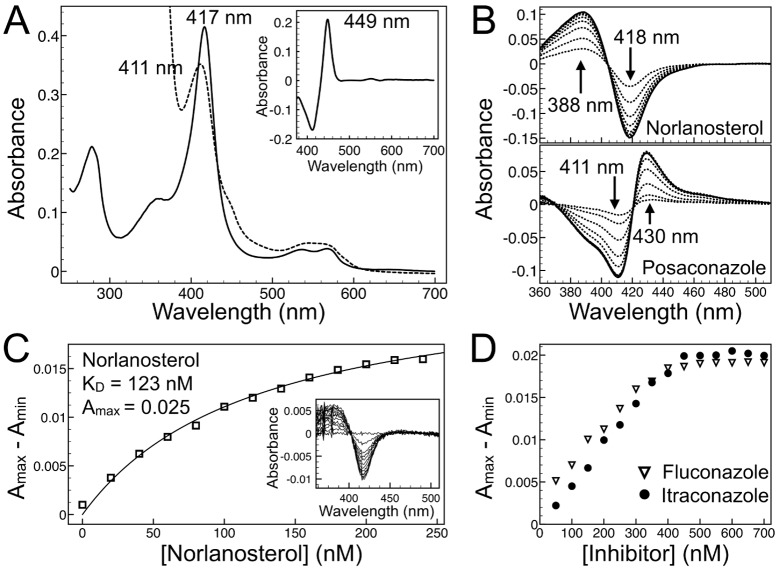 Spectroscopic analysis of recombinant NfCYP51. ( A ) Absolute UV-visible spectra of 3.5 μM purified recombinant NfCYP51: ferric, Fe 3+ ,—solid line, ferrous, Fe 2+ ,—dashed line. Inset: Fe 2+ - Fe 2+ CO difference spectra. ( B) Type I (31-norlanosterol) and type II (posaconazole) difference spectra both added in 500 nM increments to 3.5 μM NfCYP51. ( C ) Binding isotherm of 31-norlanosterol added in 25 nM increments to 0.2 μM NfCYP51 and absorbance difference spectra (Inset). ( D ) Binding isotherms of posaconazole and fluconazole, both added in 50 nM increments to 0.5 μM NfCYP51, show a linear increase in signal up until the equivalence point, after which no further increase in signal was detected.