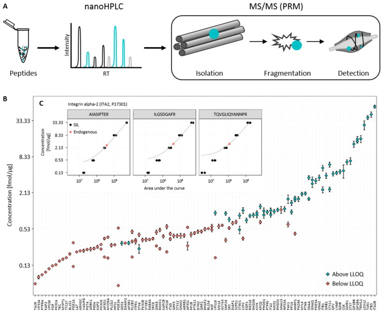 Quantification of platelet proteins by an internal standard curve. ( A ) Proteomics workflow. The prepared peptide samples were separated by nanoHPLC and measured subsequently with nanoESI-MS parallel reaction monitoring (PRM). Peptides of interest were isolated sequentially in a quadrupole, then fragmented, and finally peptide fragments detected in an <t>orbitrap</t> mass analyzer; ( B ) Distribution of endogenous concentration of quantified proteins. In total, 133 peptides corresponding to 99 proteins in human platelets were quantified; ( C ) Quantification of Integrin alpha-2 (ITA2) via an internal calibration curve and least squares linear regression. The dots represent the measured areas of the quantifier transition of the stable isotope-labeled (black) and endogenous peptides (red) plotted against the known or determined peptide concentration. Plotted in grey is the straight line fitted to the measured area under the curve of the quantifier transition of stable isotope-labeled peptide using least squares linear regression.