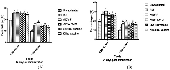 Flow cytometric analysis of CD4 + and CD8 + T cells in peripheral blood mono-nuclear cells (PBMCs) of vaccinated and unvaccinated birds at 14 ( A ) and 21 ( B ) dpi. PBMCs were collected from the birds and 1 × 10 5 cells were analyzed after addition of chicken specific Mabs conjugated with fluorescent dyes. Data represent the percentage of cells ± SEM. The values depicted in different lowercase superscripts differ significantly ( p