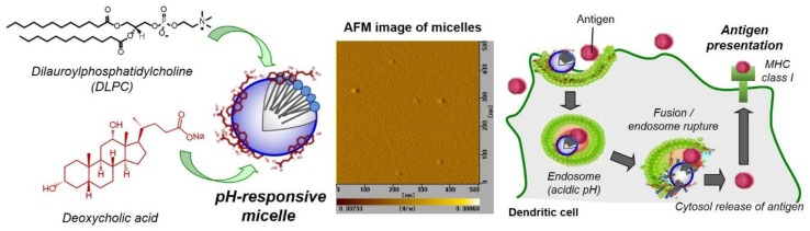 Design of pH-responsive micelles composed of DLPC and deoxycholic acid for antigen delivery into cytosol of dendritic cells and induction of antigen presentation via MHC class I molecules (cross-presentation), which leads to antigen-specific cellular immunity. An atomic force microscope (AFM) image for DLPC/deoyxcholic acid micelles is also shown.