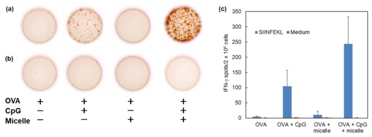 Induction of cellular immunity by pH-responsive micelles. C57BL/6 mice were immunized intradermally with 16 μg of OVA, OVA + CpG-ODN, or OVA + DLPC/deoxycholic acid micelle or OVA + CpG-ODN + DLPC/deoxycholic acid micelle. Splenocytes (2 × 10 6 cells) were collected from the immunized mice on day 7 after immunization and were cultured with ( a ) or without ( b ) OVA CTL epitope peptide (SIINFEKL) for 40 h. ( a , b ) Typical micrographs of IFN-γ-producing spots measured by ELIspot. The number of IFN-γ-producing spots is shown ( c ).