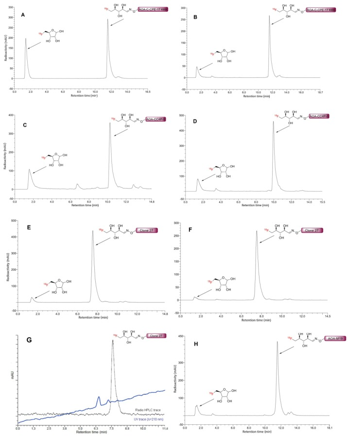 HPLC chromatograms of the crude 5-[ 18 F]FDR-AOA-peptide conjugates prepared using ammonium acetate (( A , C , E ); reaction conditions I) and anilinium acetate (( B , D , F , H ); reaction conditions II) as well as purified 5-[ 18 F]FDR-AOA-Clone 27 ([ 18 F] 11 , ( G )). Reaction conditions: I: 0.2 mol·L −1 NH 4 OAc buffer, pH 4, 75 °C, 20 min; II: 0.25 mol·L −1 anilinium acetate buffer, pH 4.6, RT, 10 min, for the applied amounts of AOA-peptides, refer to Table 2 and Table 3 . HPLC conditions: column: Phenomenex Kinetex C18 100 × 4.6 mm, 2.6 μm/100 Å; eluent: 0–15 min 10 → 40% MeCN (0.1% TFA); flow rate: 1 mL/min; t r : [ 18 F]FDR-AOA-C-CPE-17-KKK ([ 18 F] 8 , ( A , B ))—11.5 min, [ 18 F]FDR-AOA-CC4P-5 ([ 18 F] 10 , ( C , D ))—10.3 min, [ 18 F]FDR-AOA-Clone 27 ([ 18 F] 11 , ( E , F ))—7.5 min, [ 18 F]FDR-AOA-M19 ([ 18 F] 9 , ( H ))—11.6 min, side product: 5-[ 18 F]FDR—1.4 min. Radioactivity and UV- (λ = 210 nm; only ( G )) traces are shown in black and violet, respectively.