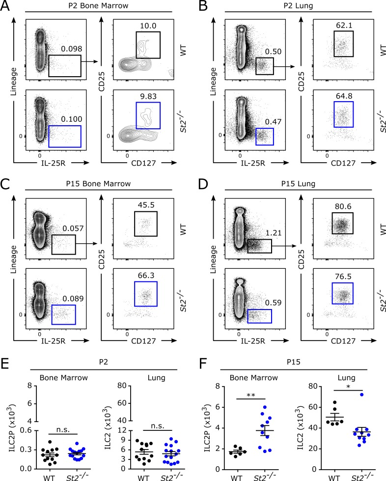 IL-33 regulates ILC2/ILC2P frequencies in the bone marrow and lung of early postnatal mice. Age-matched pups were obtained from timed breeding pairs of WT and St2 −/− mice. (A–D) Representative gating for ILC2s and ILC2Ps in P2 bone marrow (A), P2 lungs (B), P15 bone marrow (C), and P15 lungs (D). (E) The total number of ILC2Ps in the bone marrow and ILC2s in the lungs of P2 mice. (F) The total number of ILC2Ps in the bone marrow and ILC2s in the lungs of P15 mice. Data are representative of two (C and D) or three (A and B) independent experiments or combined from two (F, n = 6–10) or three (E, n = 12–15) independent experiments and displayed as the mean ± SEM. *, P