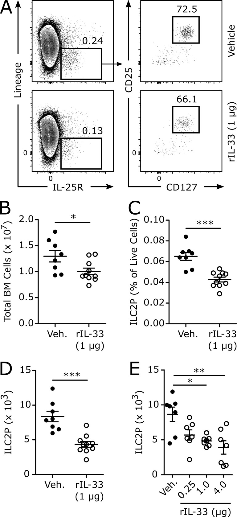 Direct intravenous administration of IL-33 decreases ILC2P frequency in the bone marrow. Adult naive WT mice were treated intravenously with rIL-33 or vehicle (0.1% BSA in PBS), and bone marrow was harvested 24 h later for flow cytometric analysis. (A) Representative gating for bone marrow ILC2Ps from mice treated with vehicle or 1 µg rIL-33. (B) The total number of viable bone marrow cells. (C) ILC2P frequency among live bone marrow cells. (D) The total number of ILC2Ps in the bone marrow. (E) The total number of ILC2Ps in the bone marrow of mice treated with vehicle or 0.25, 1, or 4 µg rIL-33 for 24 h. Data are combined from two independent experiments (B–D, n = 8–10; E, n = 7) or representative of two independent experiments (A) and are displayed as the mean ± SEM. *, P