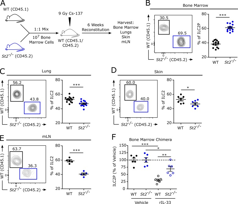 Tissue frequencies of ILC2s/ILC2Ps are established by a cell-intrinsic, ST2-dependent mechanism. 6-wk-old heterozygous CD45.1 + CD45.2 + WT mice were lethally irradiated and reconstituted with 10 million cells of a 1:1 mixture of CD45.1 + WT and CD45.2 + St2 −/− total bone marrow cells. (A) Experimental design. (B) ILC2P representative gating and pooled analyses of WT and St2 −/− -derived ILC2Ps displayed as frequencies of donor-derived ILC2Ps. (C–E) ILC2 representative gating and pooled analyses of WT and St2 −/− -derived ILC2s displayed as frequencies of donor-derived ILC2s in the lungs (C), skin (D), and mLNs (E). (F) Bone marrow chimeric mice were treated intravenously with 4 µg rIL-33 or vehicle (0.1% BSA in PBS), and cells were harvested 24 h later. ILC2P total cell numbers in the vehicle-treated mice are normalized to 100% for each genotype (WT or St2 −/− ). ILC2Ps in the rIL-33–treated mice are displayed as the percentage of vehicle-treated mice within their respective genotype. Data are combined from two (D, n = 7; E, n = 5; F, n = 6) or three (B and C, n = 13) independent experiments and displayed as the mean ± SEM. *, P